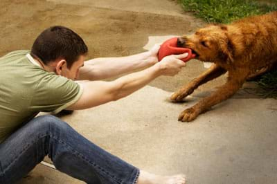 A photo shows a man and a dog in a tug of war over a squashed red ball that is being pulled one way by the man's two hands and the other way by the dog's bite.