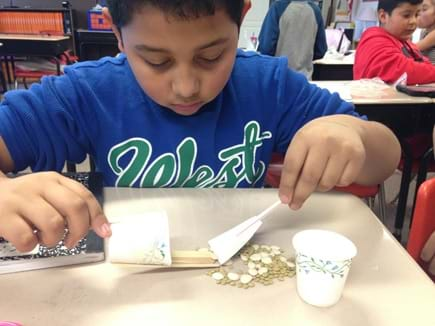 A photograph shows a young boy testing a biomedical tool designed to remove lima beans, representing cancer cells, without removing lentil beans, representing healthy cells. It looks like he is using a flat spatula to push the lima beans into a cup with an extended flat lip.