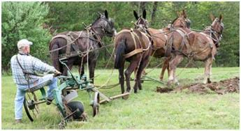 Photo shows a farmer plowing a grassy field with a plow and three mules.