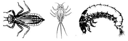 Three line drawings show insects with six legs and other characteristics: 1) three antennae and one tail, 2) two antennae and three tails, and 3) looks more like a caterpillar.