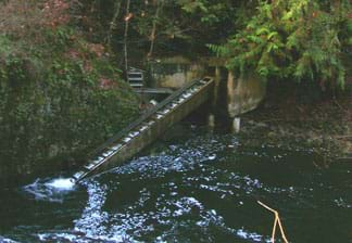 Photo shows rising water-covered steps coming out of a river, parallel to the river.