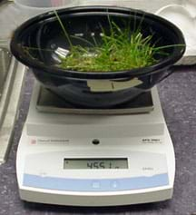 Photo shows plastic bowl with a piece of sod in it sitting on a platform scale.