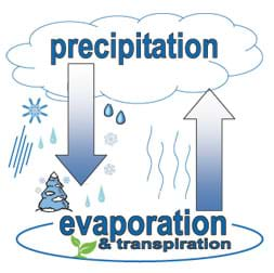 Diagram shows circular relationship between precipitation and evaporation/transpiration using arrows and snow/rain coming from a cloud.