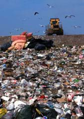 Photo shows a bulldozer and flying birds near a heap of garbage in a landfill.