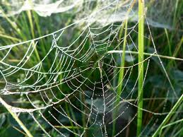 A spider web in nature.