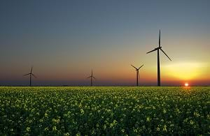 A field of wind turbines illustrating alternative renewable energy.