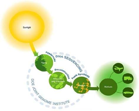 A drawing illustrating how sunlight can eventually turn into biofuels for cars.