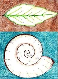 Two colorful drawings: on the top is a leaf and on the bottom is a spiral shell.
