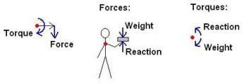 A stick-man with a book in his outstretched hand. Straight arrows indicate forces (in the form of weight and reaction), and curved arrows indicate torques (in the form of weight and reaction).