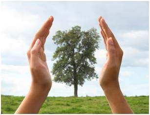 A photograph of a single tree in a field. Transposed over the top of the image, huge hands are cupping the tree on each side.