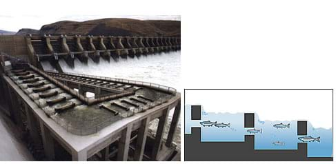 Two images: A photo shows a low-grade, ramp-shaped concrete structure at one side of a dam. A cut-away diagram shows an adult fish ladder.