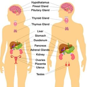 An illustration showing the endocrine system in both males and females.