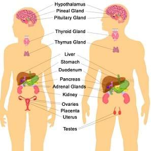 Unlocking the Endocrine System - Lesson - TeachEngineering