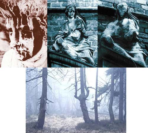 Four photographs: Three show the physical deterioration of outdoor statues. One shows dying trees in a forest.