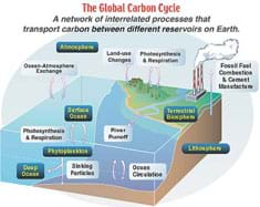 Diagram shows a network of interrelated processes that transport carbon between different reservoirs on Earth.