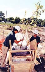 Two people with hardhats prepare to plant a young tree in soil.