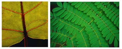 Close-up photos of leaves, showing stalks, blades and pores.
