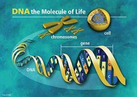 Graphic shows images of DNA helix, gene, chromosomes and cell, with headline: DNA – the molecule of life.