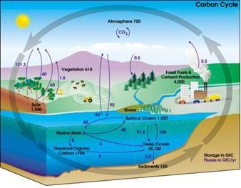 Carbon cycles lesson teachengineering a diagram illustrating how carbon cycles through the atmosphere land ocean and the earths ccuart Choice Image