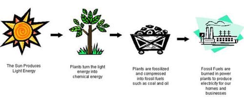 how plants turn the su...