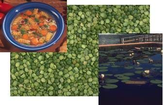 Three overlaying photographs of a bowl of soup, a grouping of peas and a pond.