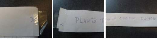 "Three photos: (left) hand-written letter ""A"" on the end of a long strip of adding machine tape with a piece of sticky tape adhered to half of its edge, (center)  hand-written word ""Plants..."" on a long strip of paper, (right) hand-written words ""take in carbon dioxide"" that finish off a description of one cycle of nature."