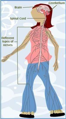 Nerve Racking - Lesson - TeachEngineering