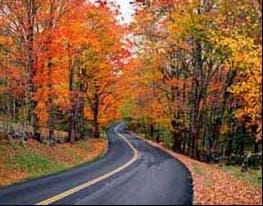 A photograph shows a two-lane road leading through a colorful thicket of trees.