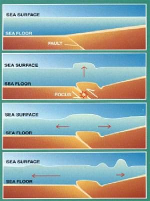 A four-stage diagram shows an underwater earthquake violently pushing up the sea floor, which in turn pushes up the water above the fault location. This water ripple becomes a giant wave as it approaches the shallow water near shore.