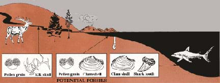 Schematic landscape drawing shows an ocean, hillside, river and mountains. A shark, clam, elk and trees are shown in their habitats. Arrows connect the river, shore and deep water locations to boxes depicting animal and plant parts (pollen grains, elk skull, clam shell, shark tooth) that might be found there in fossil form.