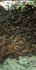 Photo shows layers of different colored and textured soil beneath ground level.