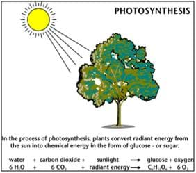 A photosynthesis reaction diagram shows the products and reactants of the process, which includes converting water, CO2 and sunlight to glucose and oxygen.