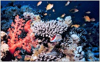 Photo of colorful coral reef. Small, tropical fish are swimming among the reef.