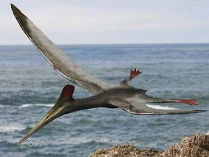 An artists' rendering of a pterodactylus, a prehistoric flying bird.