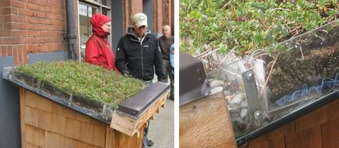 Two photos show (left) people standing near a 3-ft x 3-ft angled rooftop on a box at waist height, with a gutter at the lower sill and clear side panels, enabling one to see a three to four-inch thick green roof composed of roof deck, membranes, gravel, soil, roots and plants, and (right) close-up of same.