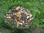 Photo shows a 3-ft high open wire cage enclosing a pile of vegetable trimmings and egg shells in a grassy backyard.