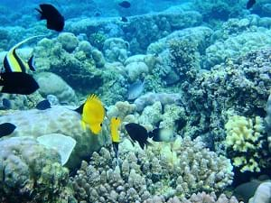 A glimpse of some of the fish and marine life at the Bunaken Marine Park.