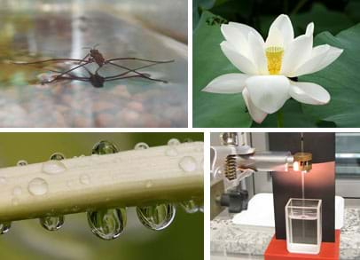 Four images (clockwise from top left): A water strider insect, a lotus flower with many white petals, apparatus to measure surface tension by how high a liquid climbs a capillary tube, and water droplets on a leaf.