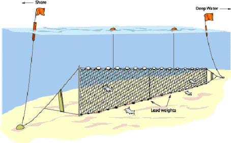 A drawing shows an underwater net set up on the sea floor; it looks like a fence of netting with lead wights and buoys floating above to note its location.