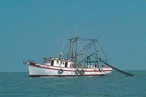 Photo of a commercial shrimp trawler.