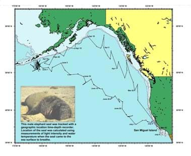 A map of the ocean between California, Canada and Alaska is overlaid with connected data points that show the locations of one elephant seal over time. An inset image shows the animal and says: This male elephant seal was tracked with a geographic location time-depth recorder. Location of the seal was calculated using measurements of light intensity and water temperature when the seal came to the sea surface to breathe.