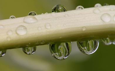 Photo shows near view of water droplets on leaf.