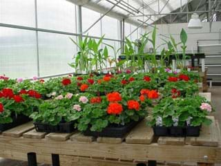 preview of 'Model Greenhouses' Activity