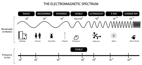 A black line diagram describes the electromagnetic spectrum by providing relative wavelengths (in meters) and frequencies (in Hz) for each portion of the spectrum: radio (10^3 meters, 10^4 Hz), microwave, infrared, visible, ultraviolet, x-ray and gamma ray (10^-12 meters, 10^20 Hz) waves. Simple drawings of buildings, people, a honey bee, a pinpoint, protozoans, molecules, atoms and atomic nuclei provide equivalents to help visualize the wide range of wavelength sizes in the spectrum.