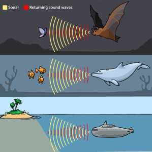 A drawing shows a bat, whale and submarine using sound waves to detect obstacles or food.