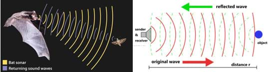 A drawing shows a bat using emitted and returning sound waves to detect an insect. A line drawing shows a device emitting waves a distance r towards an object and reflected waves returning to the device.