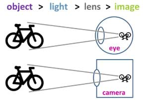 "A simple diagram compares a human eyeball ""seeing"" a bicycle and a camera ""seeing"" a bicycle. The observed object, the bicycle, appears upside down inside and at the back wall of the eyeball (retina) and camera (film), both having been perceived by a lens focusing incoming light onto a photosensitive area."