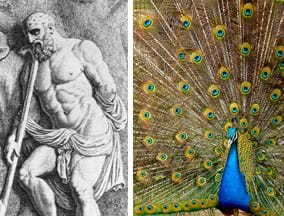 Two images: A black ink drawing shows a strong, bearded man with a cloth draped around his waist, holding a long staff; his bald head is covered with many eyes. A photograph of a blue peacock with tail feathers spread, showing a scattering of many eye-shapes in the feathers' coloring.