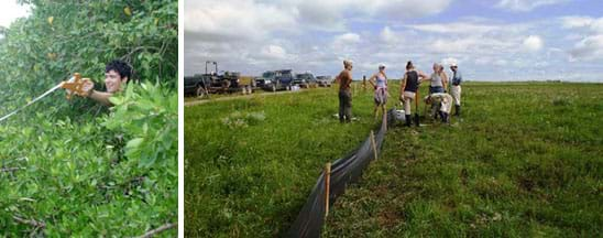 Two photos: A student behind a shrub and under a tree holds out a long, spooled survey tape measure connected to somewhere outside of the image. Six people in a wide open green field work to install a drift fence made of stakes and a black porous plastic material.