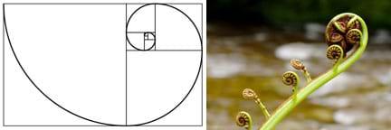 discovering phi the golden ratio activity. Black Bedroom Furniture Sets. Home Design Ideas